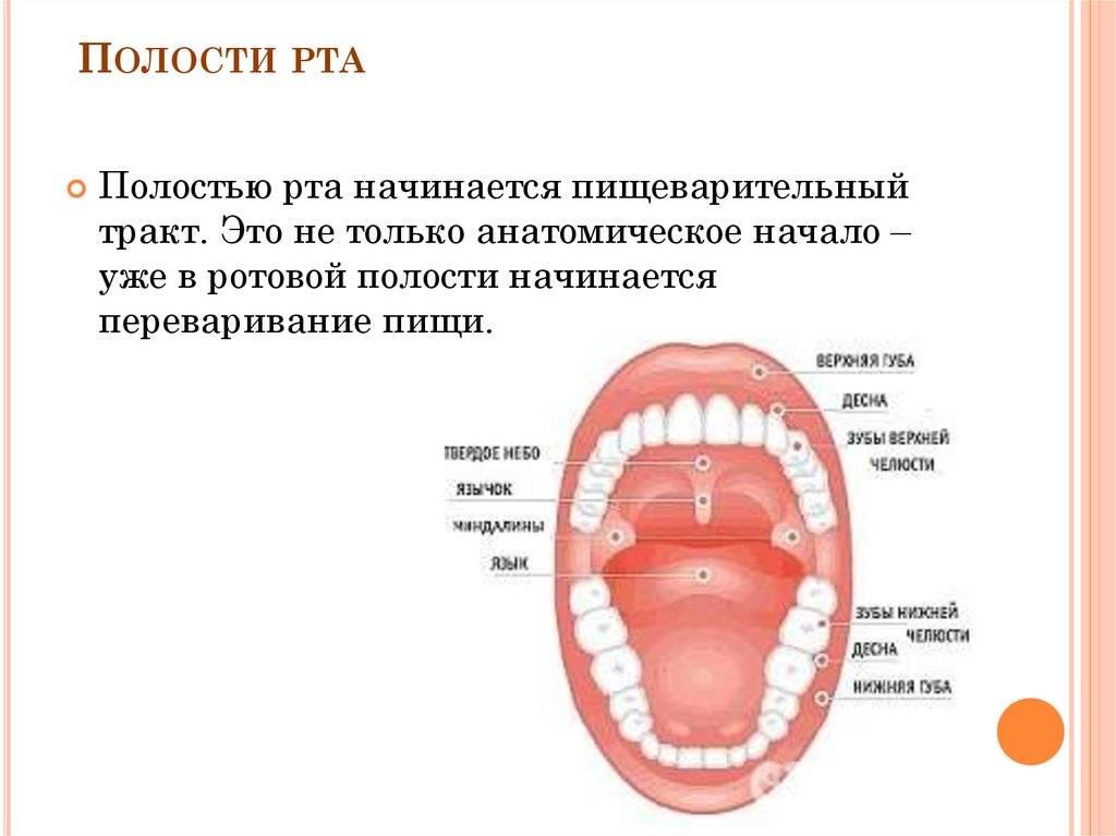 Проблема плохих зубов у взрослых: список заболеваний и фото с описанием основных зубных болезней