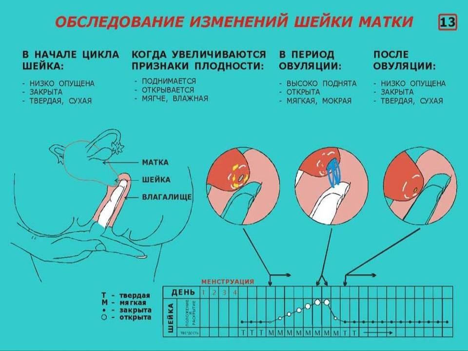 Как самостоятельно измерять размер матки.