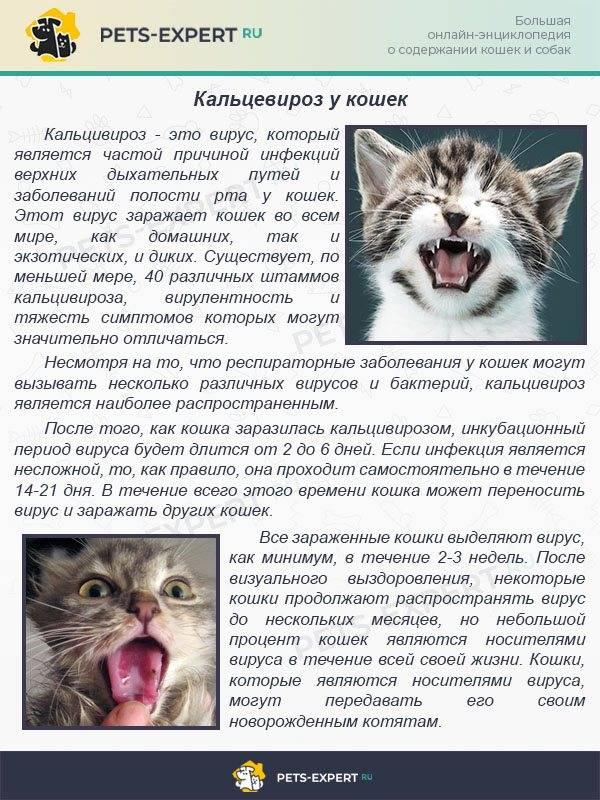 Гингивит у кошек: лечение и профилактика
