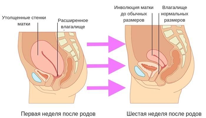 Как ускорить сокращение матки после родов
