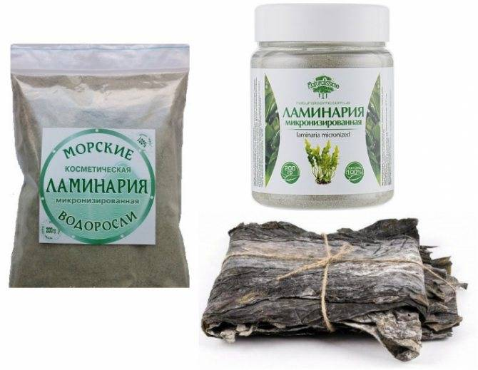 Полезные свойства и правила употребления ламинарии сушеной для быстрого похудения
