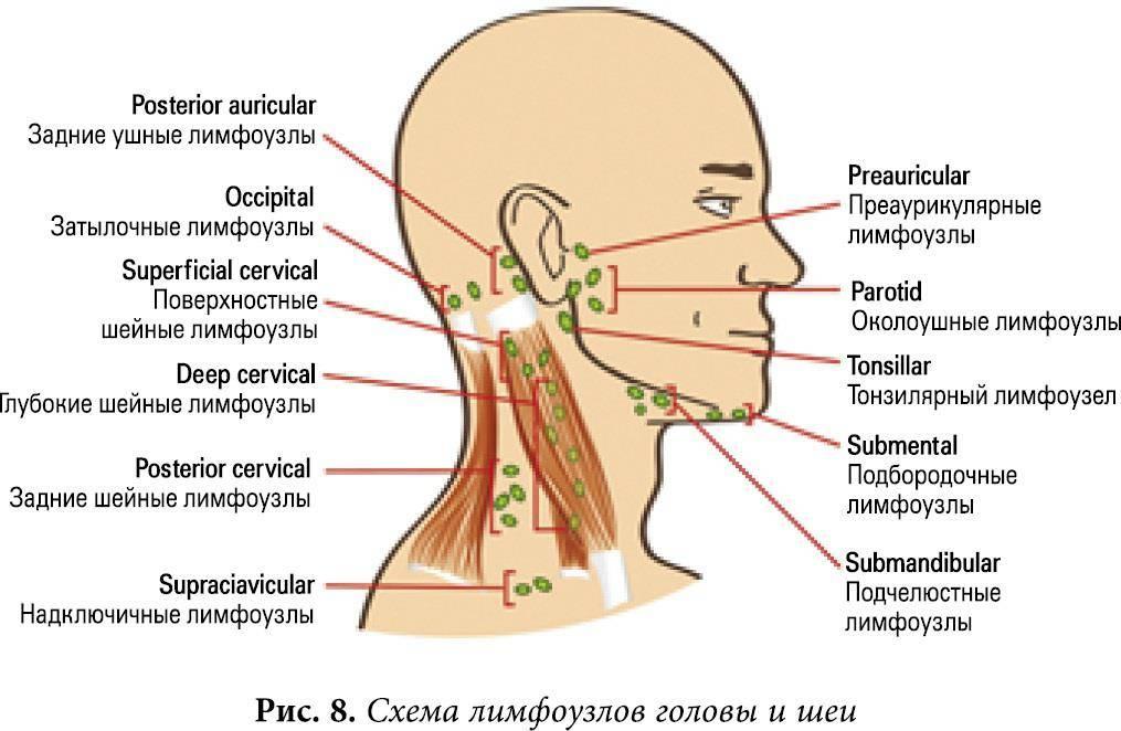О чем говорит увеличенный лимфоузел за ухом?