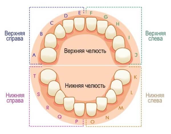 Различные схемы нумерации зубов в стоматологии у детей и взрослых