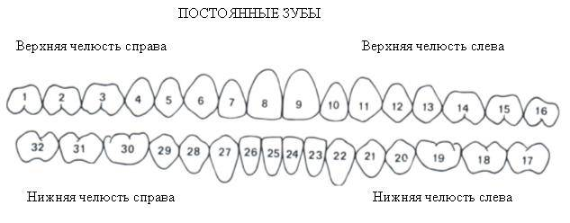 Системы нумерации зубов: iso (fdi), универсальная, зигмонди-палмера (+наглядные иллюстрации)