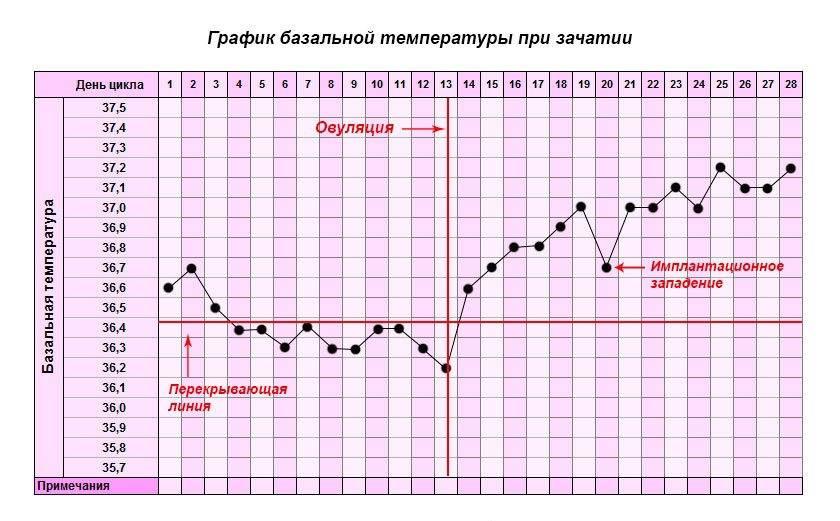 Правила измерения базальной температуры для определения овуляции