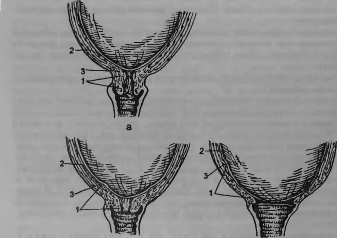 Раскрытие шейки матки при родах сколько пальцев