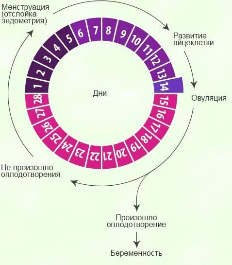 Причины укорочения менструационного цикла