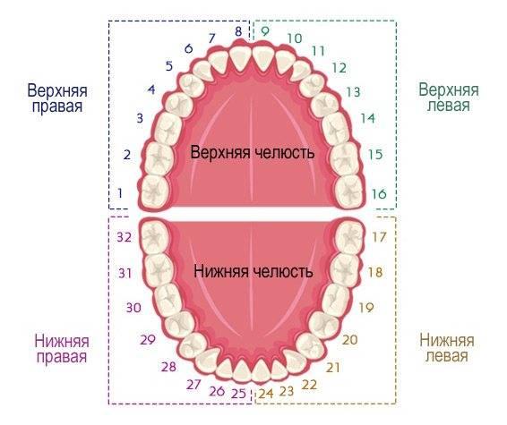 Сколько каналов в зубе верхней и нижней челюсти?