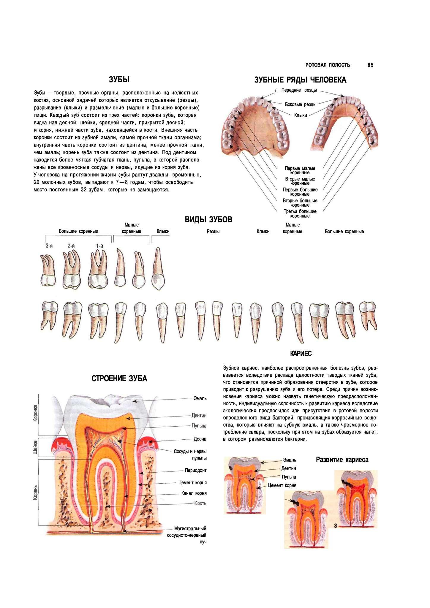 Болезни полости рта: основные инфекции во рту у человека