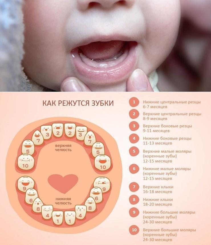 Во сколько месяцев лезут первые зубы у мальчиков
