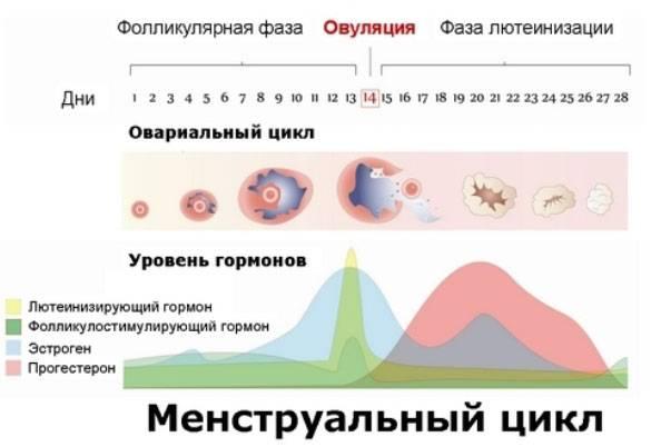 Причины короткого менструационного цикла