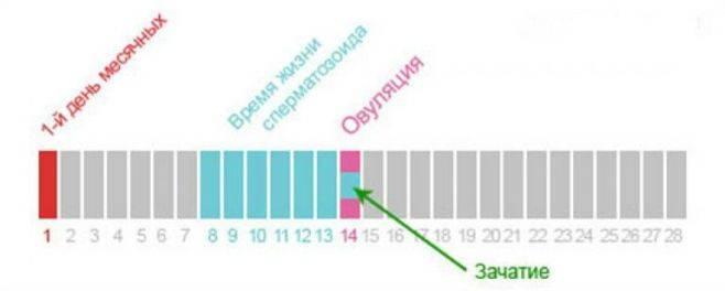 Овуляция за 1-3-7 дней до месячных и во время (подробно!)