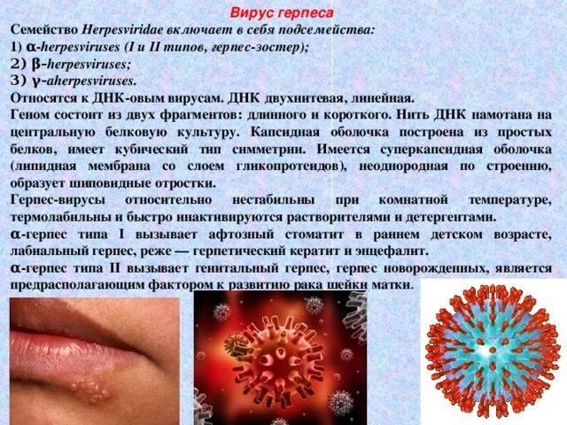 Как проявляется и лечится герпес во рту у взрослых?