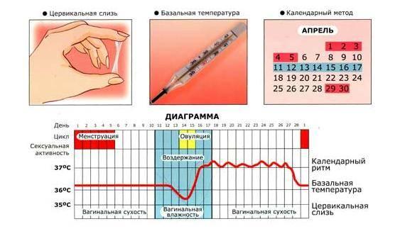 Признаки, симптомы, ощущения во время овуляции