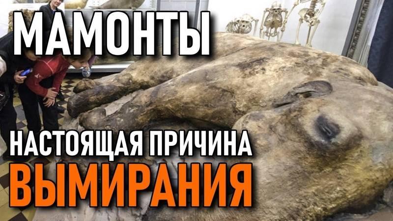 «творила ужасные вещи»: историк соколов потребовал обнародовать переписку саспиранткой