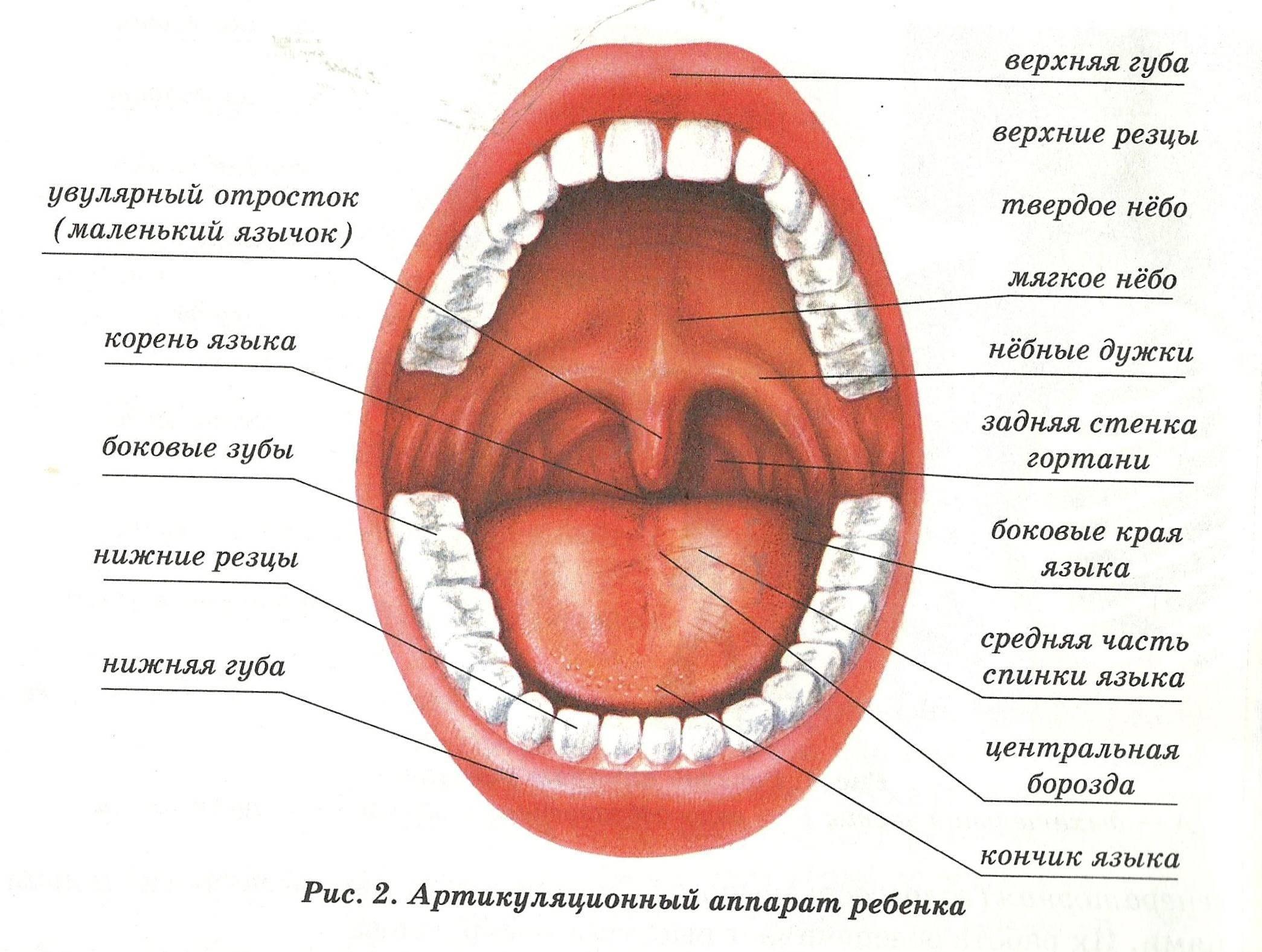 Альвеолярный остит: когда удалили зуб небрежно