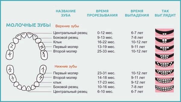 Сколько зубов у детей