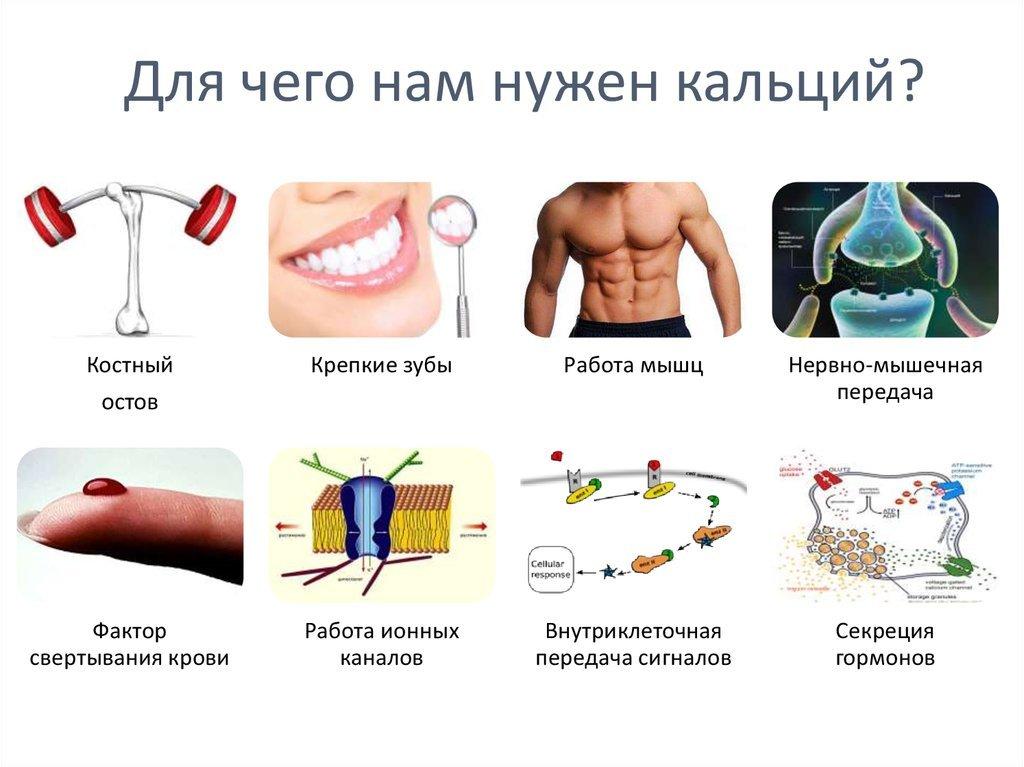 Роль кальция в организме человека. источники, нормы, особенности