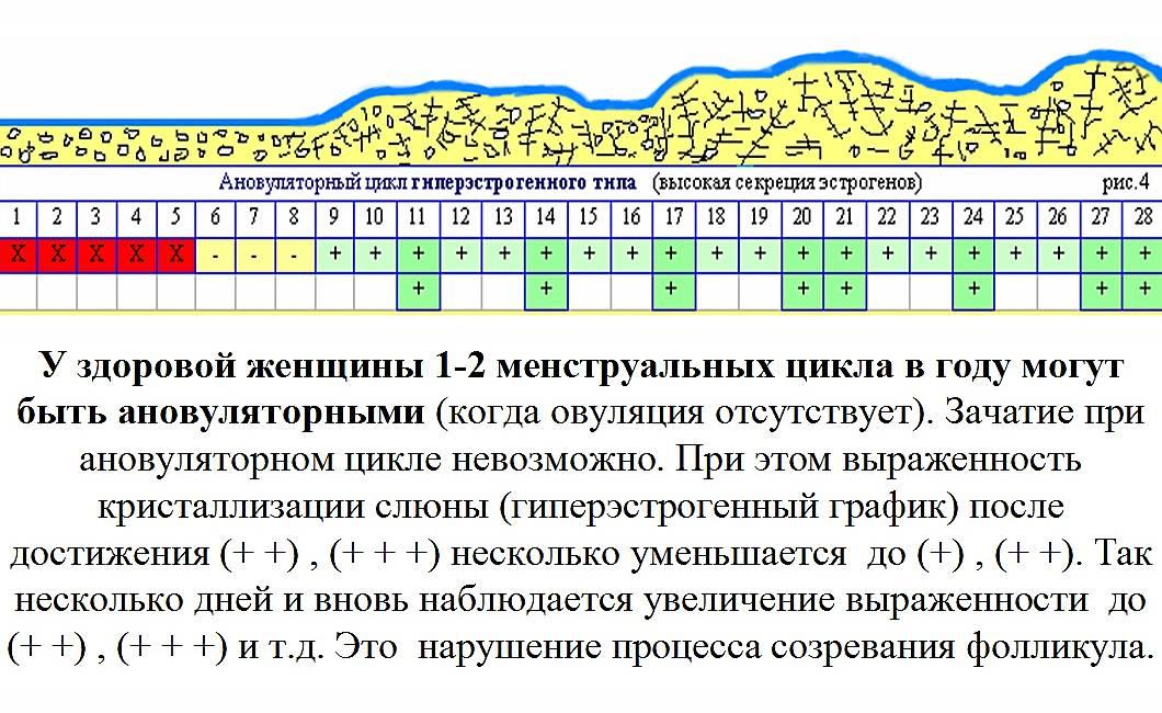 Когда наступает овуляция при цикле 28 дней и сколько она длится?