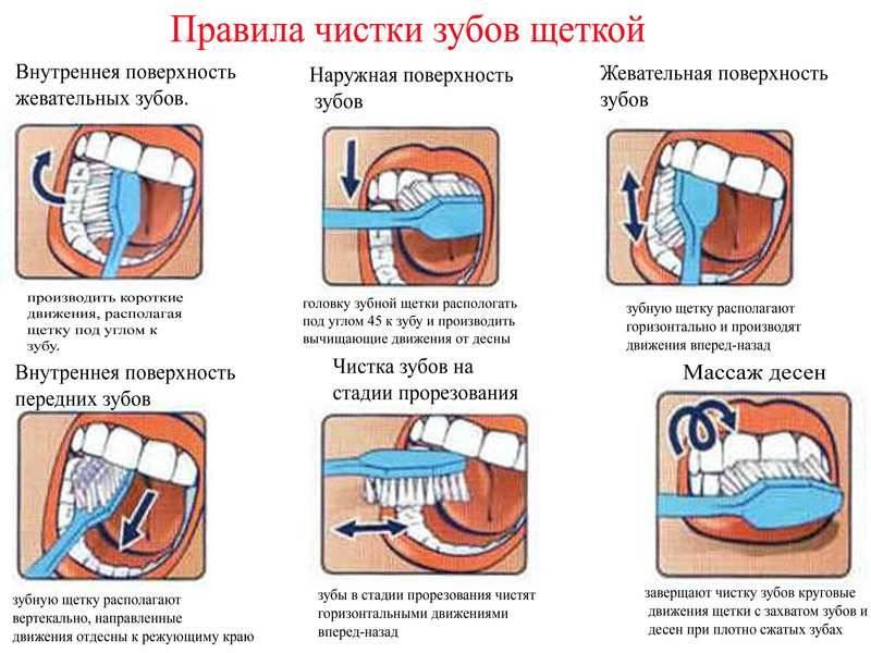 Сколько раз в день, как и когда чистить зубы? стоматологи рекомендуют