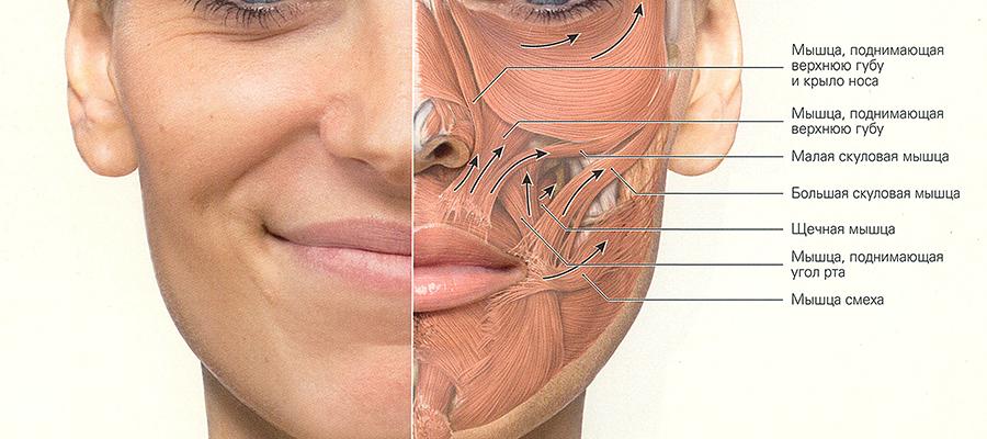 Почему немеет нижняя губа и что при это делать?
