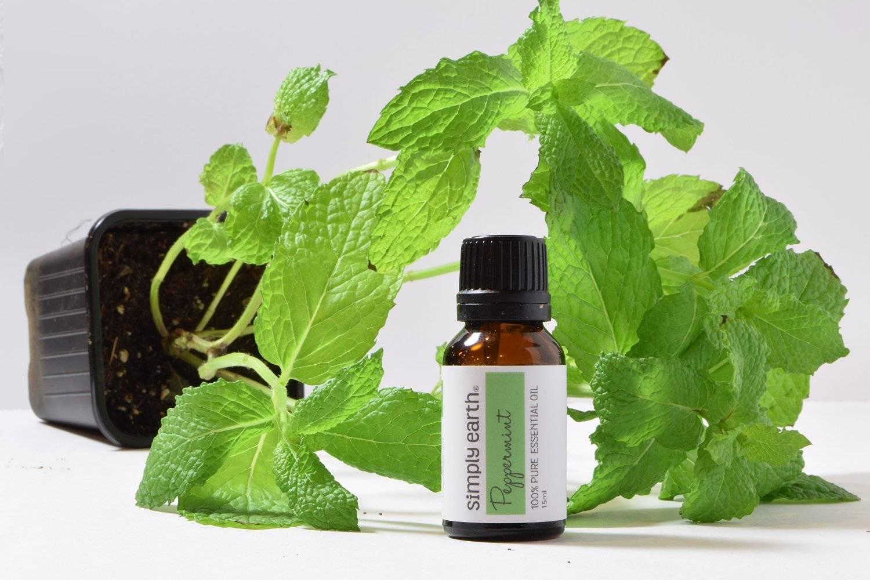Применение эфирного масла мяты для кожи лица
