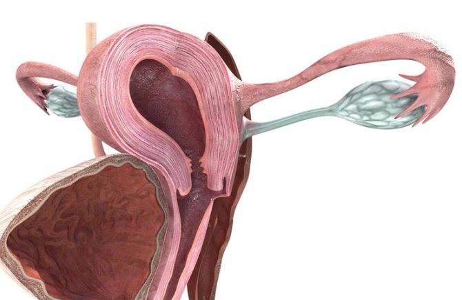 Серозометра в области матки в менопаузе: причины, лечение, прогноз